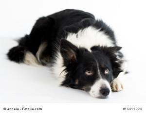 raumahund-oder-vorsichtiger-Geniesser