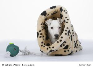 Rückzugsort für schüchternen Hund