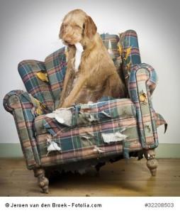 Hundeerziehung- an das Alleinbleiben gewöhnen