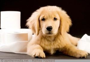 Hundewelpen-Stubenrein-bei-Problemen
